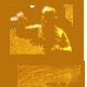 Avicii Gold